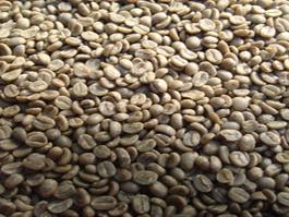 Medium Roast Quality coffee from Boquete Panama